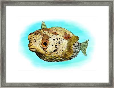 Long-spine Porcupine Fish Framed Print by Roger Hall