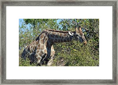 Long Stretch Framed Print