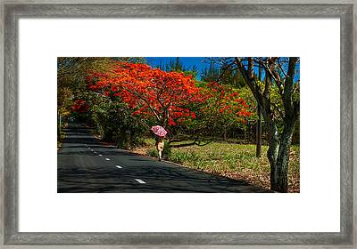 Long Way Along The Road. Mauritius Framed Print by Jenny Rainbow