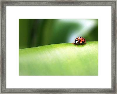 Long Way To Go Framed Print