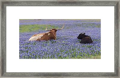 Longhorn And Friend Framed Print by Colleen Dyer
