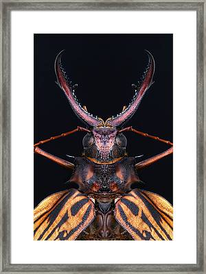 Longhorn Beetle Macrodontia Cervicornis Framed Print
