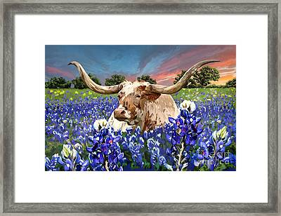 Longhorn In Bluebonnets Framed Print by Tim Gilliland