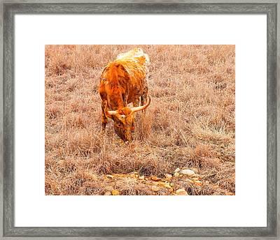 Longhorn Framed Print by Mickey Harkins