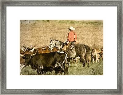Framed Print featuring the photograph Longhorn Round Up by Steven Bateson