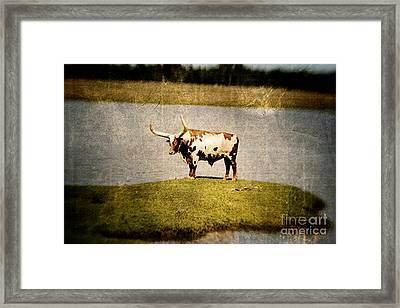 Longhorn Framed Print by Scott Pellegrin