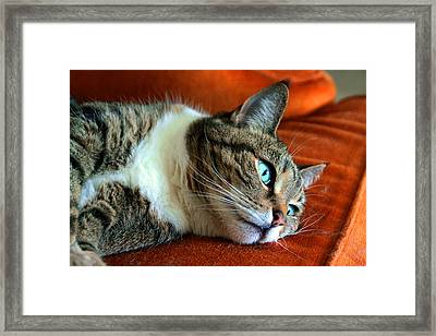 Framed Print featuring the photograph Longing by Mike Flynn