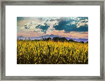 Longs Peak Harvest Framed Print by Rebecca Adams