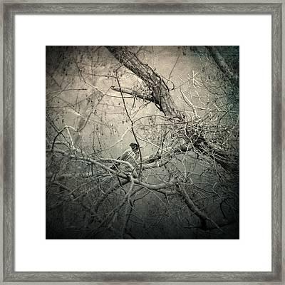 Lontano Framed Print by Taylan Apukovska