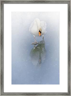 Look Alike Framed Print