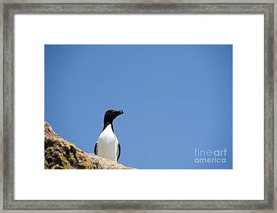 Look At Me Framed Print by Anne Gilbert