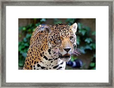 Look At Me Framed Print by Evan Peller