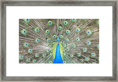 Look At Me Framed Print by Jose Benavides