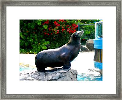 Framed Print featuring the photograph Look At Me by Kristine Merc