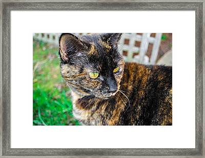 Framed Print featuring the photograph Look At Me by Naomi Burgess