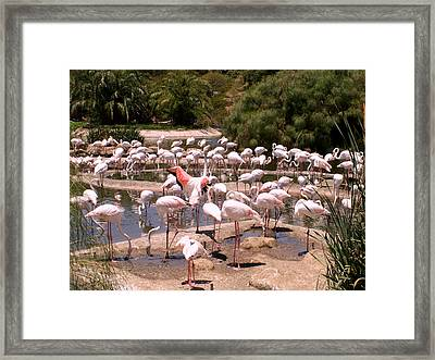 Framed Print featuring the photograph Look At Me  by Sandy Molinaro