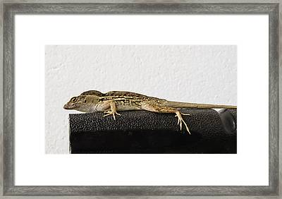 Look At Me Framed Print by Zina Stromberg