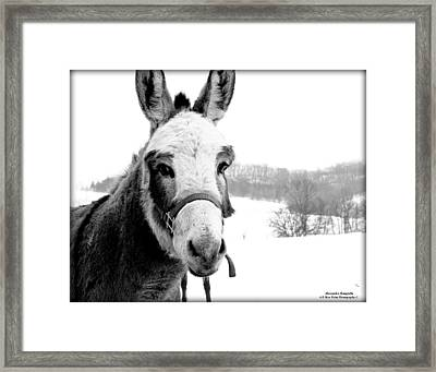 Look At Meee Framed Print by Alexandra  Rampolla