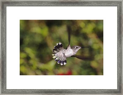 Look At Meeeeee Framed Print by Mike Herdering