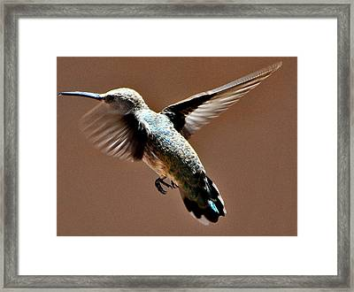 Framed Print featuring the photograph Look At My Crazy Crows Feet by Jay Milo