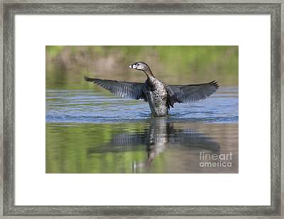 Look At My Wings Framed Print by Ruth Jolly