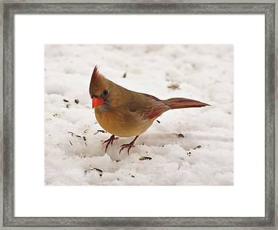 Look At You Framed Print by Sandy Keeton