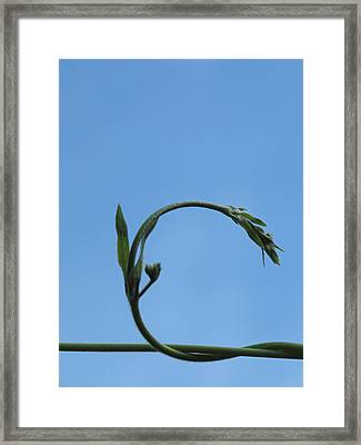 Look Back As You Move Forward. Framed Print