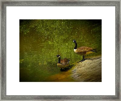 Look Before You Leap Framed Print by Dave Bosse