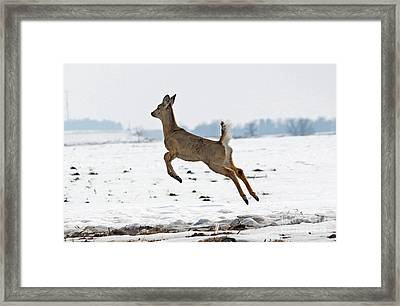 Look I Am Flying Framed Print by Lori Tordsen