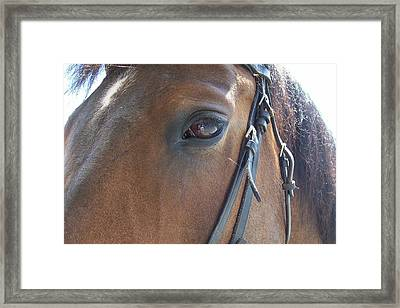 Look In My Eye Framed Print