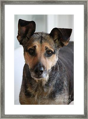 Look In To Her Big Brown Eyes Framed Print