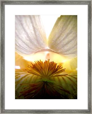Look Inside The Iris Framed Print by Virginia Forbes