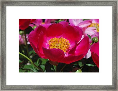 Look Into My Center Framed Print