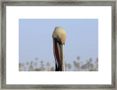 Framed Print featuring the photograph Look Into My Eye  by Christy Pooschke