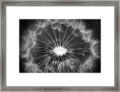 Look Into My Eye Framed Print