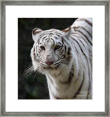 Look Into My Eyes  Framed Print by Ruth Jolly