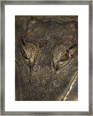 Look Into My Eyes Framed Print by Svetlana Sewell