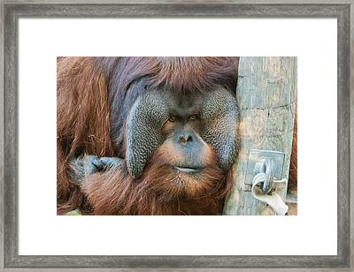 Framed Print featuring the photograph Look Into My Eyes by Tim Stanley