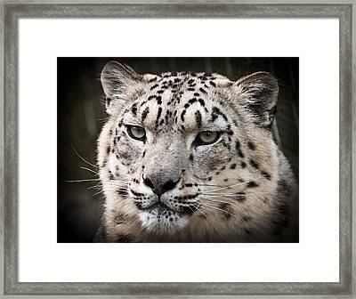 Look Into My Leopard Eyes Framed Print