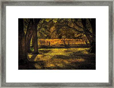 Look Into The Golden Light Framed Print by Marvin Spates