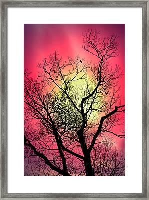 Look Into The Sun Framed Print