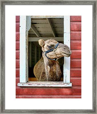 Look Left Framed Print