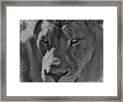 Framed Print featuring the photograph Look Of Concern by Elaine Malott