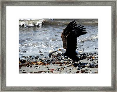 Look Out - I'm Hungry Framed Print by Angela Ford