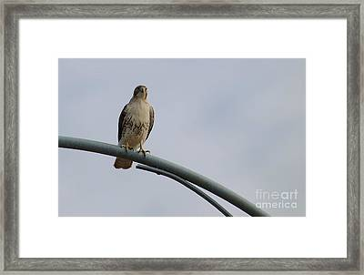Look Out Tower Framed Print by Joy Bradley