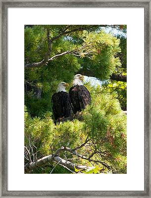 Look Over There Framed Print