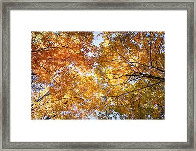 Look Up Framed Print by Cricket Hackmann