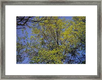 Look Up Framed Print by Dusty Reed
