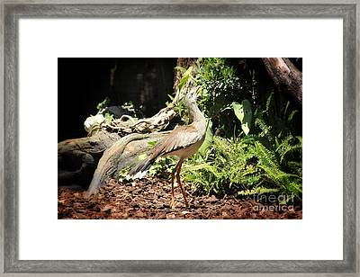 Look Up Framed Print by Jackie Mestrom