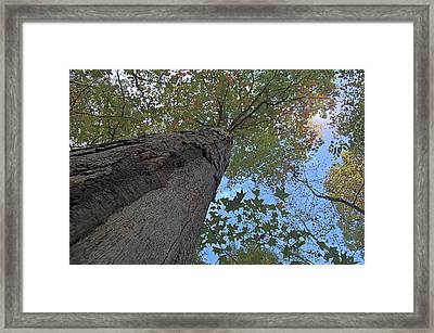Framed Print featuring the photograph Look Up by Michael Donahue